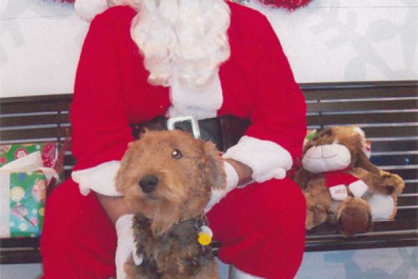 airedale with Santa