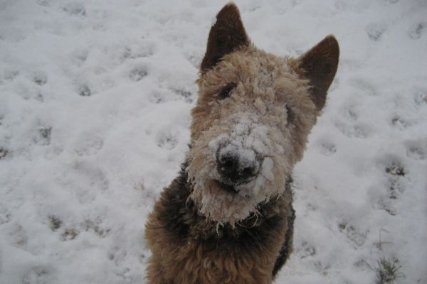airedale snow day