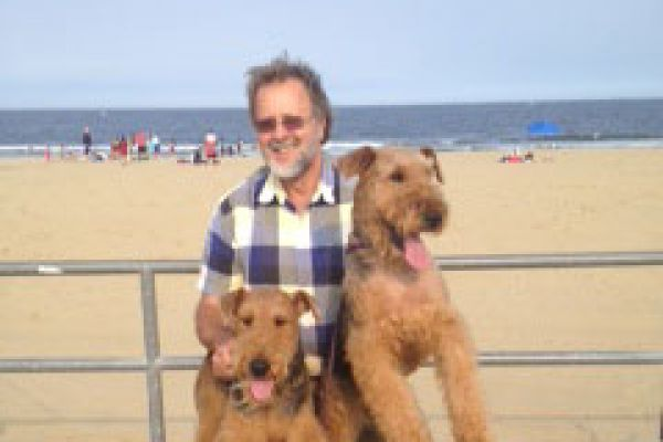 grown airedales at the beach