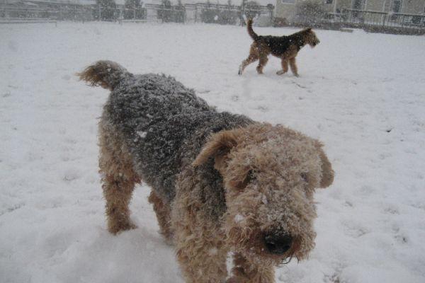 dogs-in-snowCD3228E1-4C84-F2D5-F50A-0AD67B6C2F5F.jpg