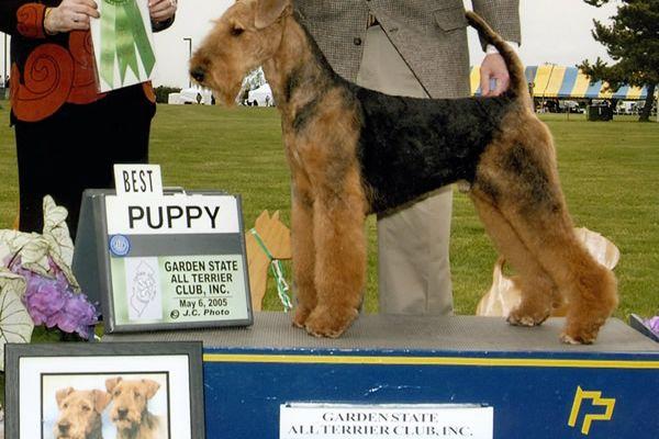 asa-wins-puppy-sweepstakesC361690F-4CA5-CF93-8C44-22549FD0C996.jpg