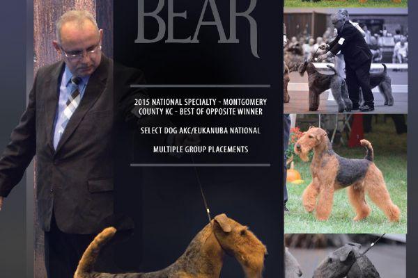 bear01-192D141B2-A5FF-05B6-CCCD-407770F06B4E.jpg