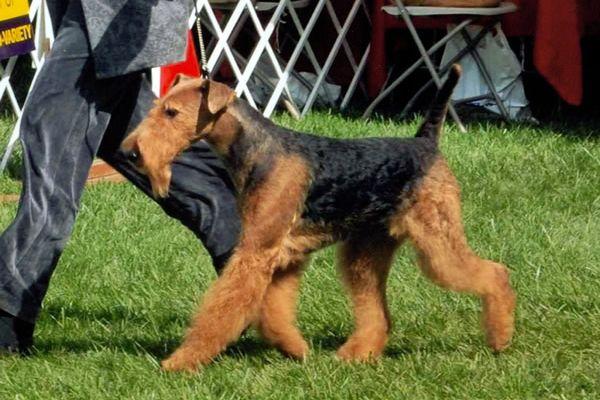 zack-at-montgomery-puppy-sweepst72C229DB-F0B5-E92D-00E3-34D05FBB6913.jpg